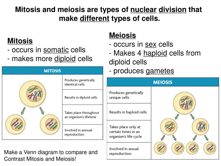 Mitosis and