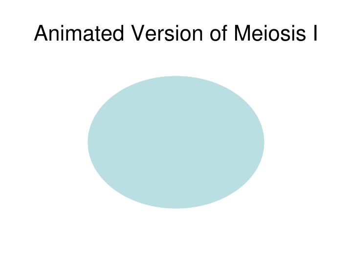 Animated Version of Meiosis I