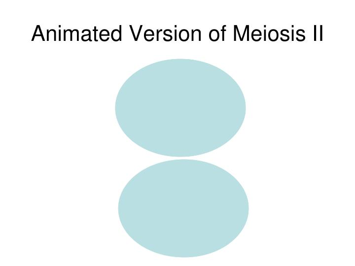 Animated Version of Meiosis II