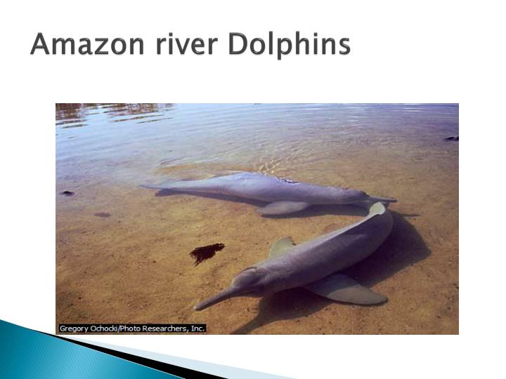 Amazon river Dolphins