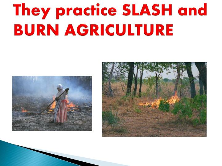 They practice SLASH and BURN AGRICULTURE