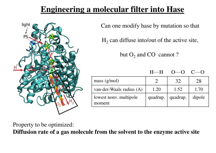 Engineering a molecular filter into Hase