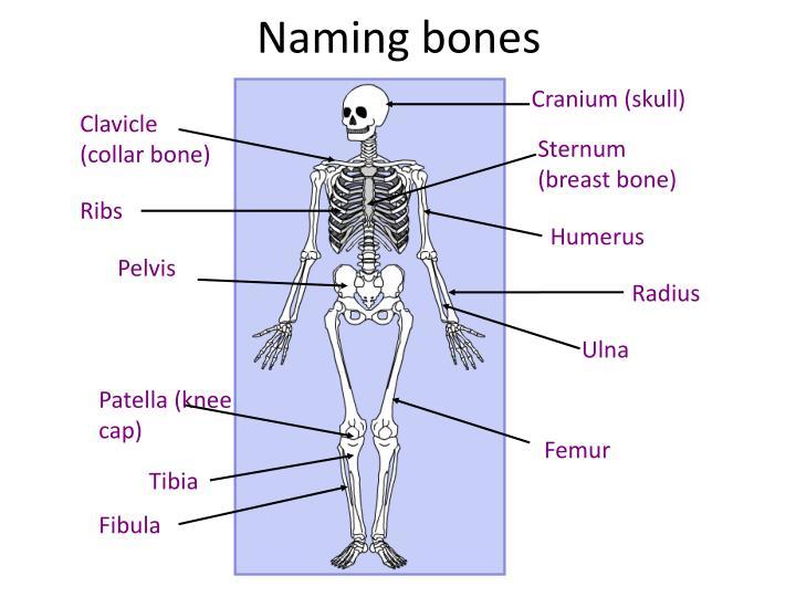 Naming bones