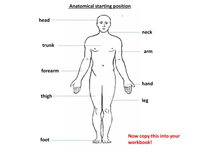 Anatomical starting position