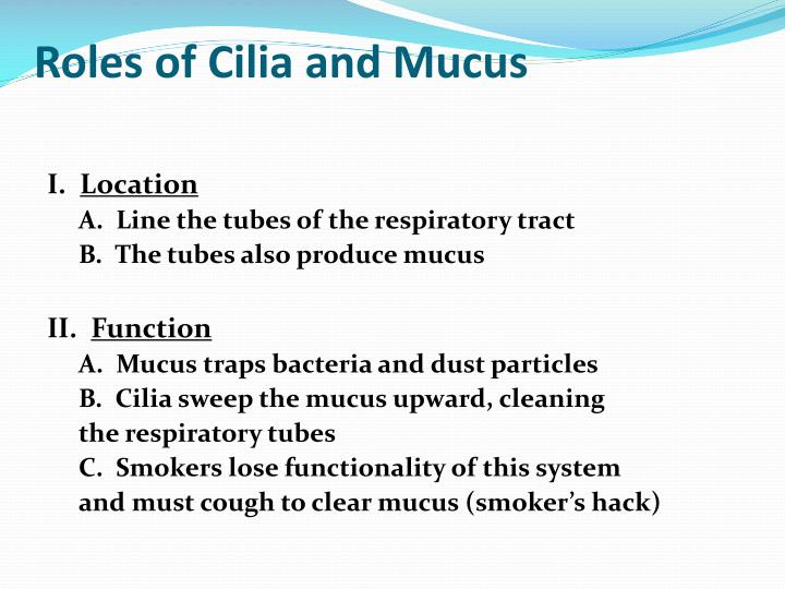 Roles of Cilia and Mucus