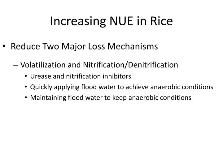 Increasing nue in rice