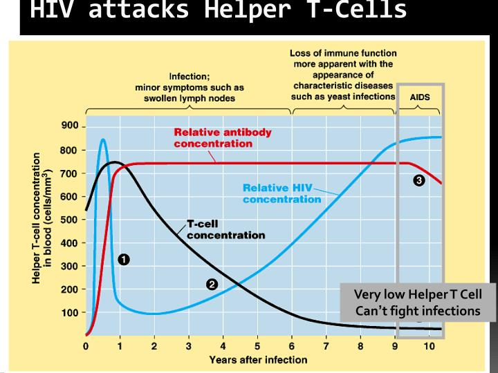HIV attacks Helper T-Cells