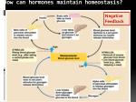 how can hormones maintain homeostasis