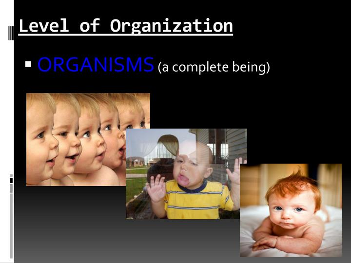 Level of Organization