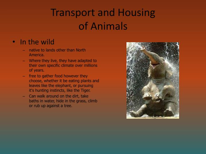Transport and housing of animals