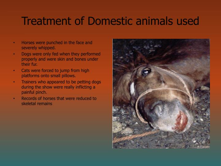 Treatment of Domestic animals used