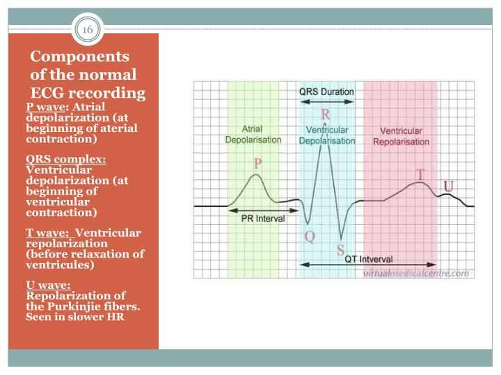 Components of the normal ECG recording