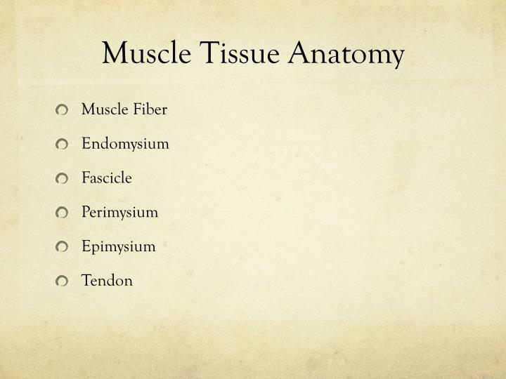 Muscle Tissue Anatomy