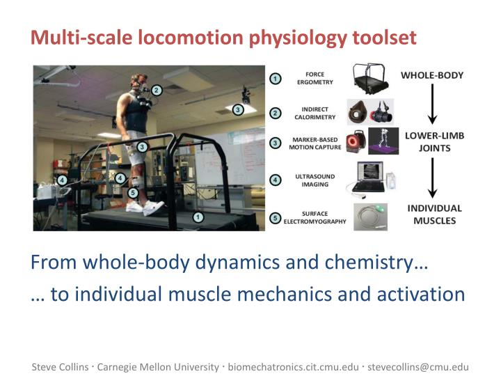 Multi-scale locomotion physiology toolset