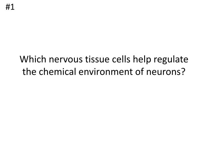 Which nervous tissue cells help regulate the chemical environment of neurons