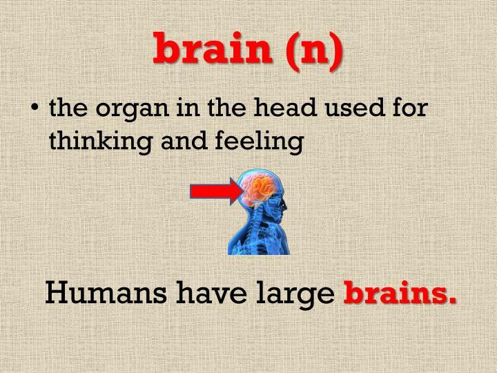 brain (n)