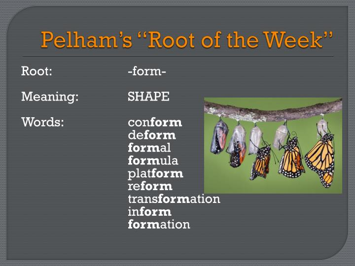 """Pelham's """"Root of the Week"""""""