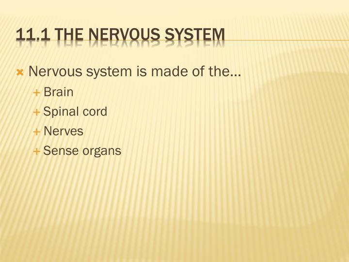 Nervous system is made of the…