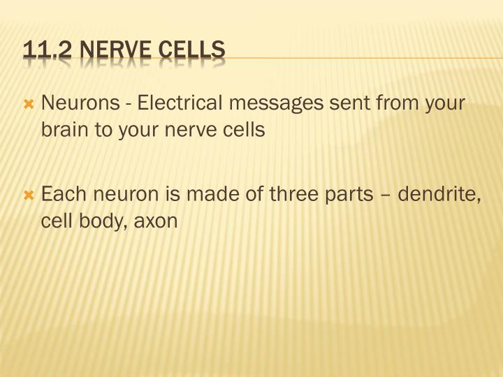 Neurons - Electrical messages sent from your brain to your nerve cells