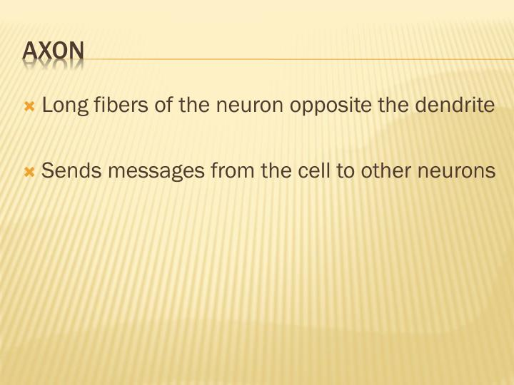 Long fibers of the neuron opposite the dendrite