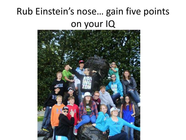 Rub Einstein's nose… gain five points on your IQ