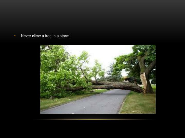 Never clime a tree In a storm!