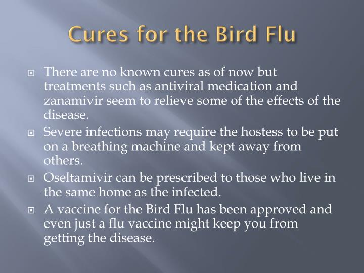Cures for the Bird Flu