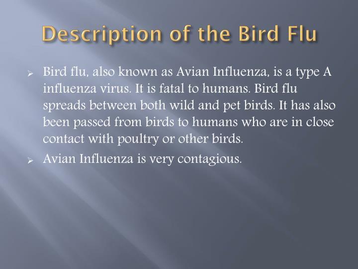 Description of the Bird Flu