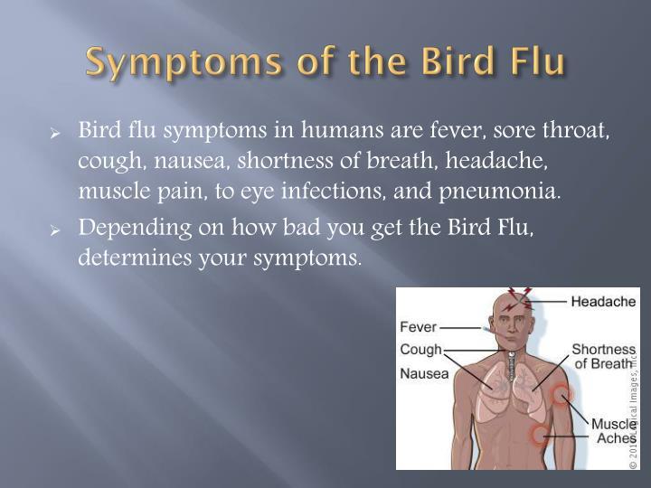 Symptoms of the Bird Flu