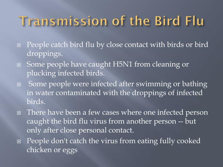 Transmission of the Bird Flu