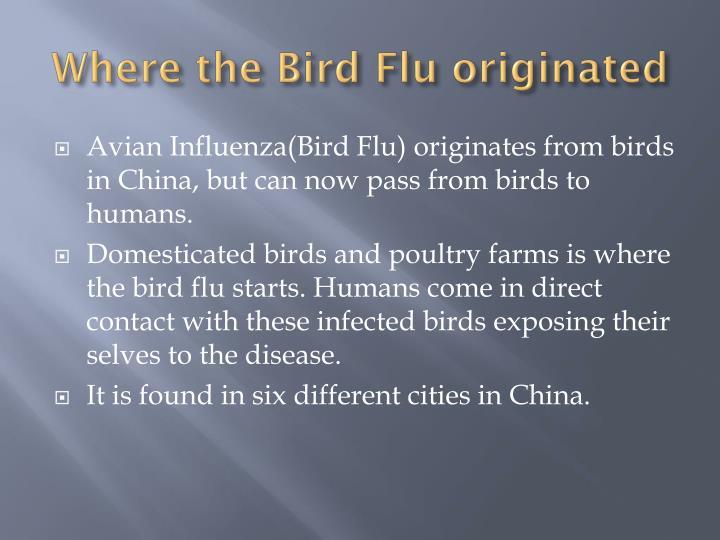 Where the Bird Flu originated