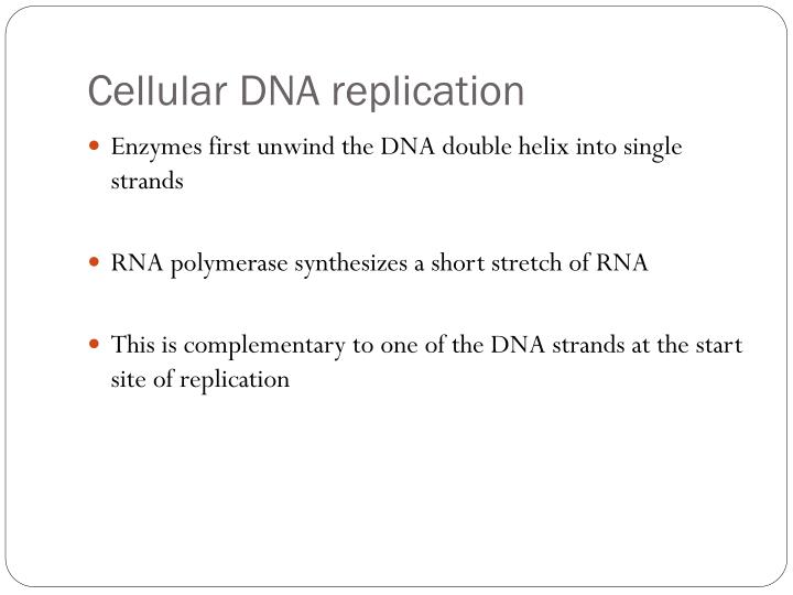 Cellular DNA replication