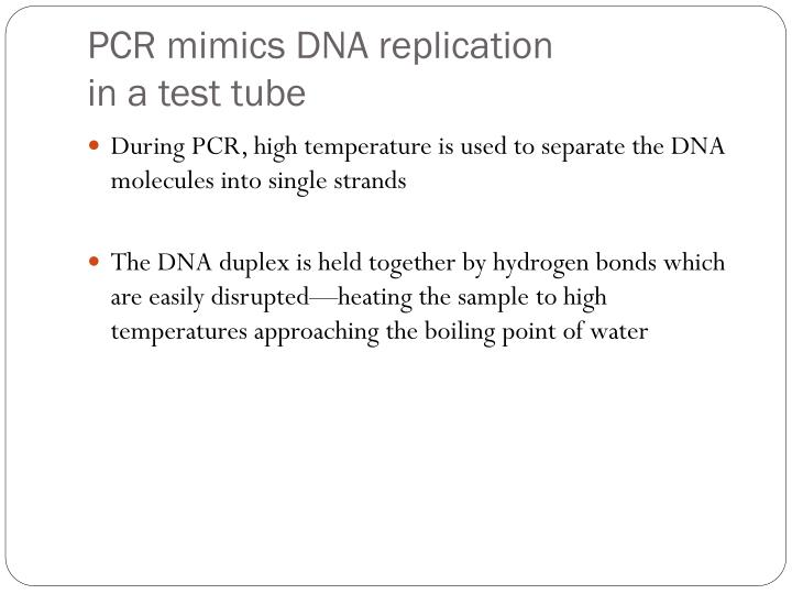 PCR mimics DNA replication