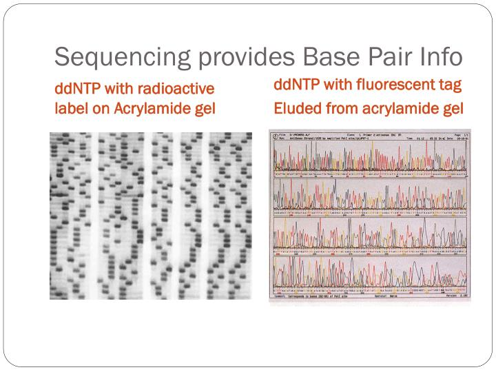 Sequencing provides Base Pair Info
