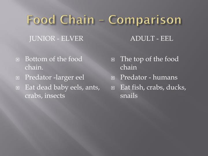 Food Chain – Comparison