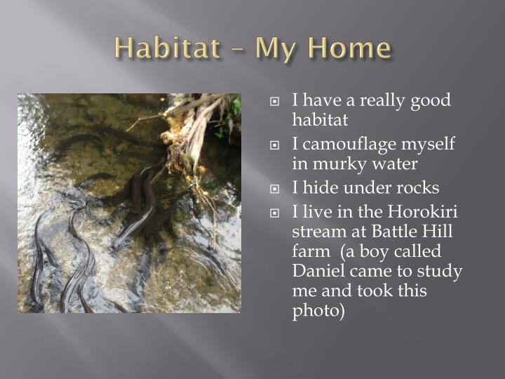 Habitat – My Home