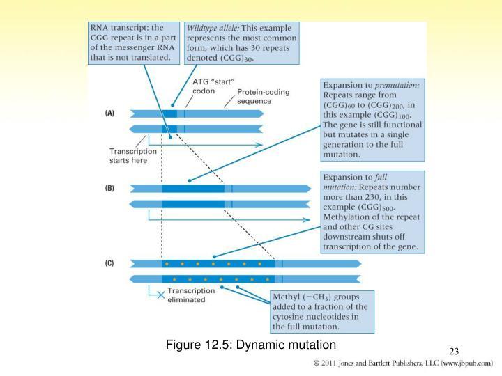 Figure 12.5: Dynamic mutation