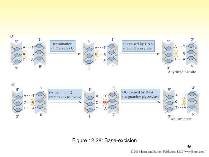 Figure 12.28: Base-excision