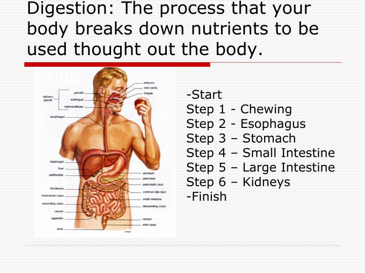 Digestion: The process that your body breaks down nutrients to be used thought out the body.