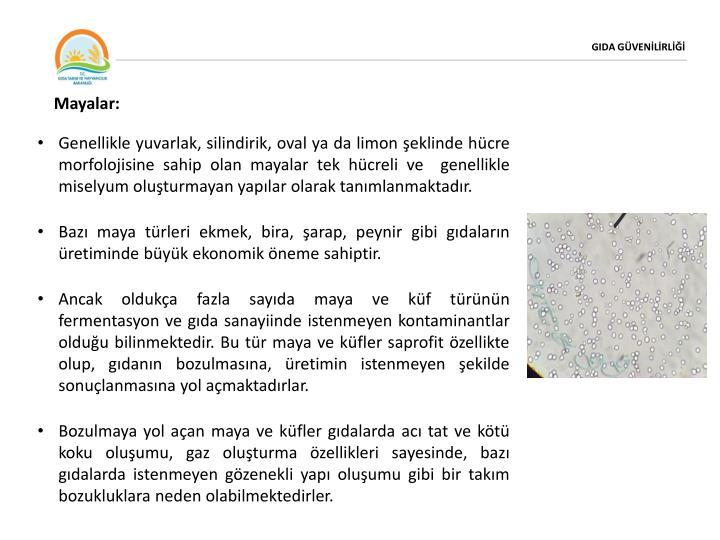 Mayalar: