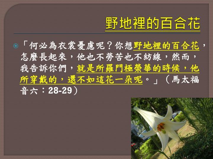 野地裡的百合花