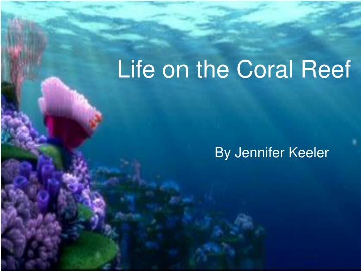 Life on the Coral Reef