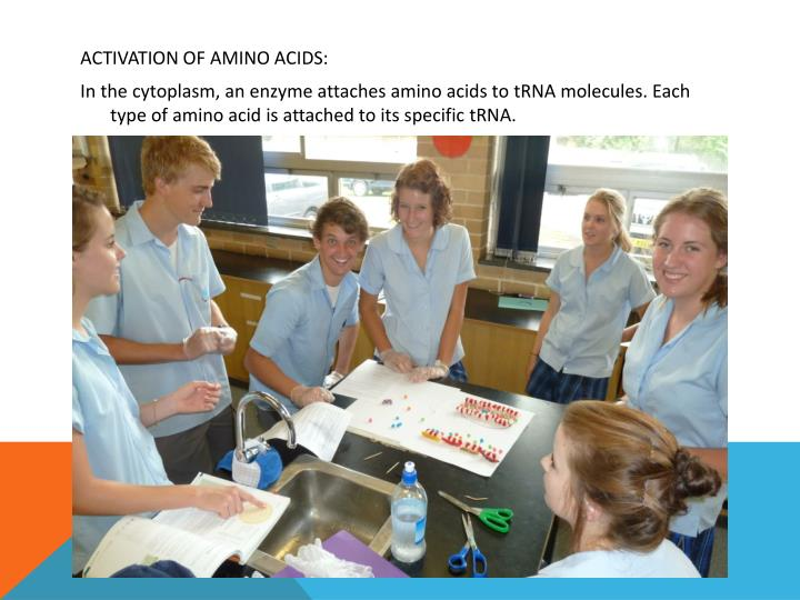 ACTIVATION OF AMINO ACIDS: