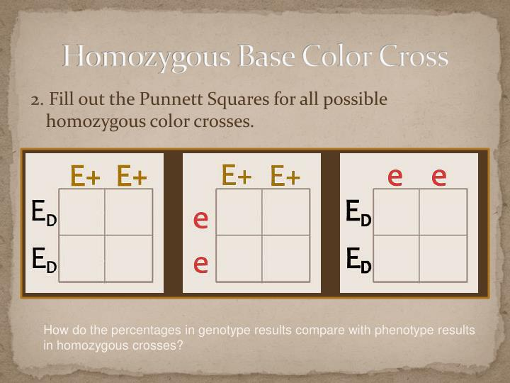 Homozygous Base Color Cross