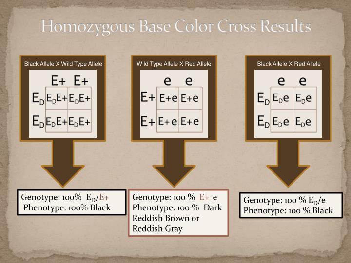 Homozygous Base Color Cross Results