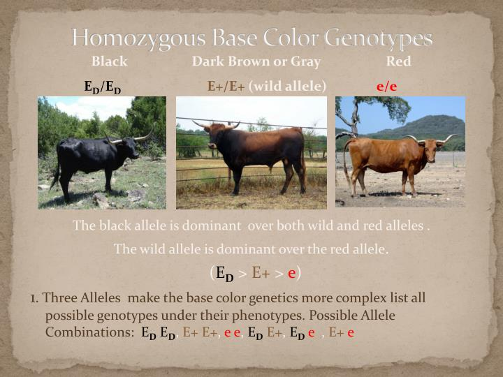 Homozygous Base Color Genotypes