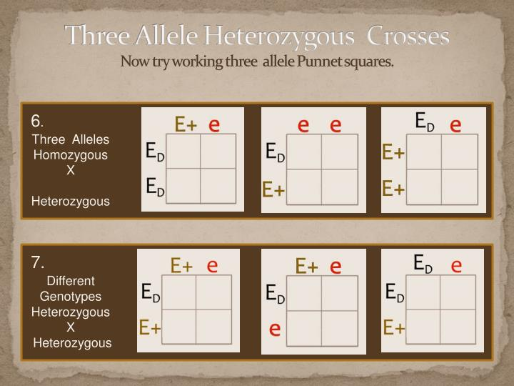 Three Allele Heterozygous  Crosses