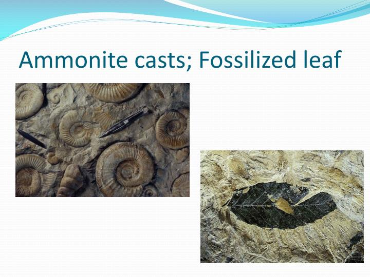 Ammonite casts; Fossilized leaf