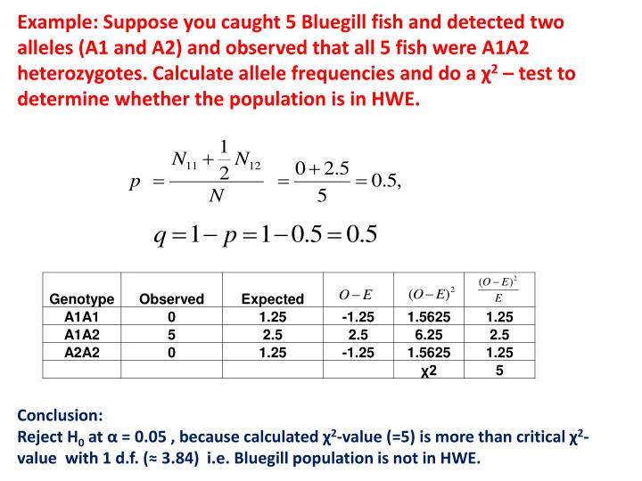 Example: Suppose you caught 5 Bluegill fish and detected two alleles (A1 and A2) and observed that all 5 fish were A1A2 heterozygotes. Calculate allele frequencies and do a