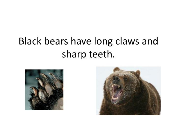 Black bears have long claws and sharp teeth.